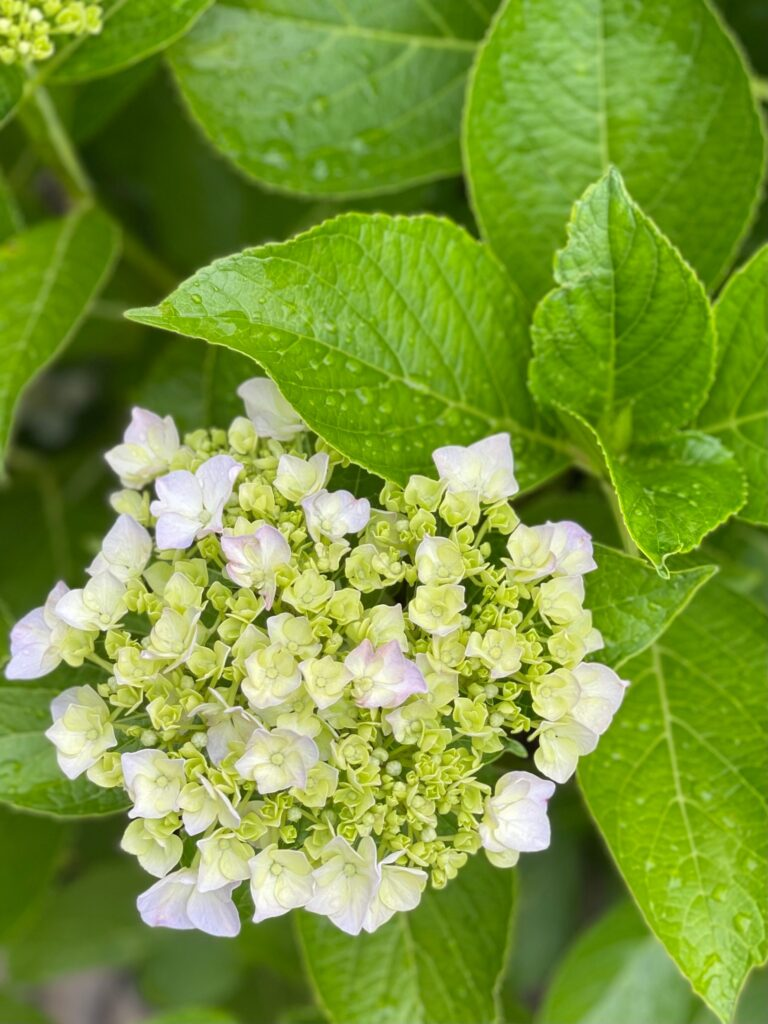 CRYSTAL BEAUTY.サロンのお庭 | クリスタルビューティー 広島 天然100%ヘナ 美と健康のエステ