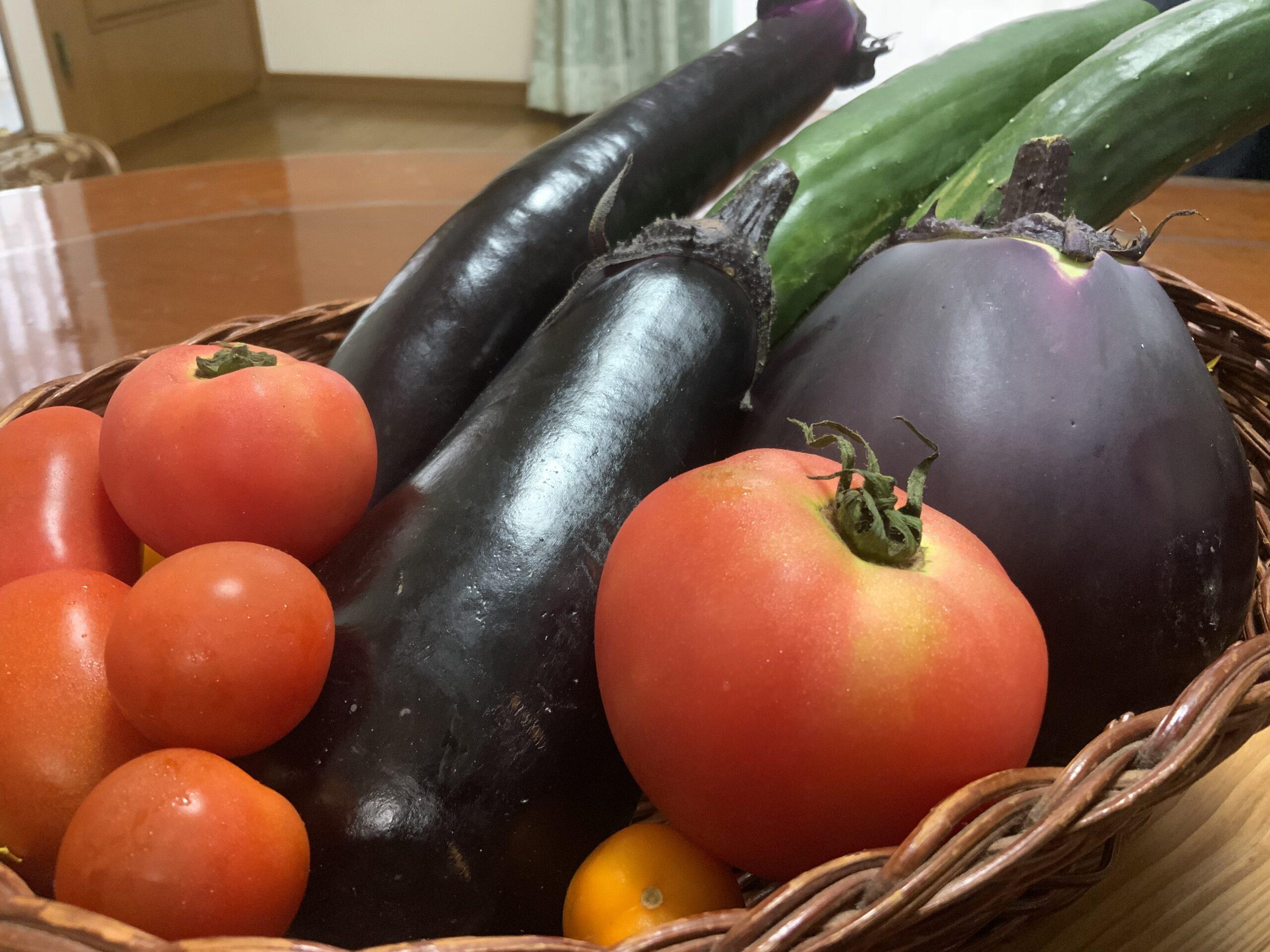 夏野菜頂きました   クリスタルビューティー 広島 天然100%ヘナ 美と健康のエステ