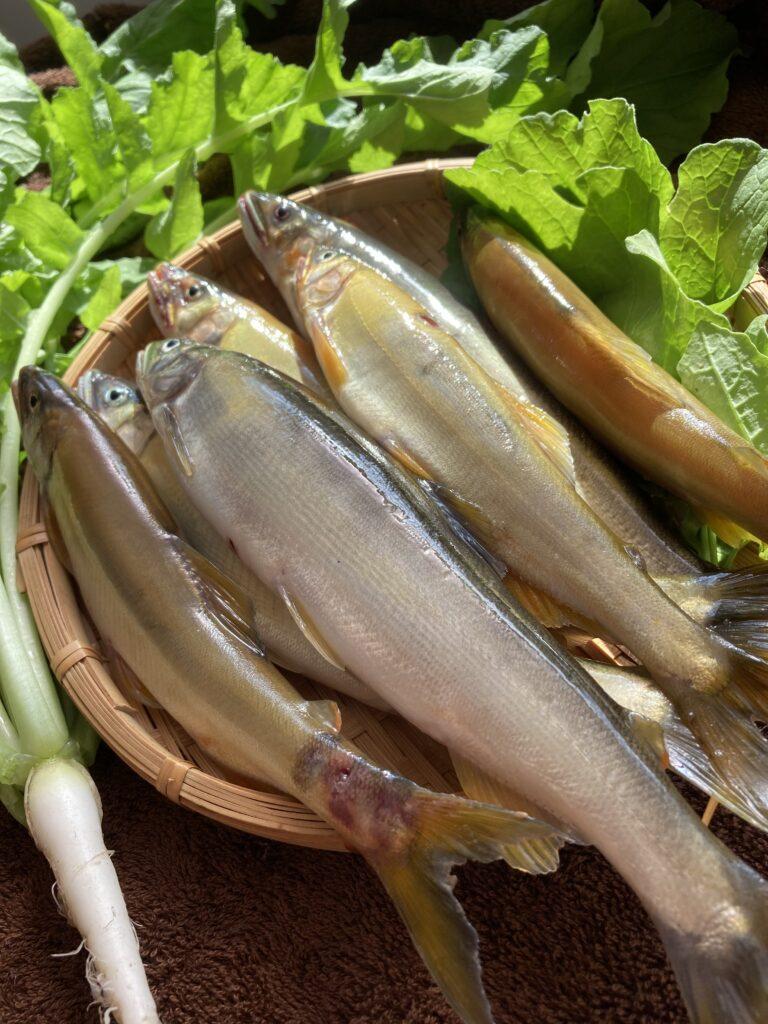 鮎を戴きました   クリスタルビューティー 広島 天然100%ヘナ 美と健康のエステ