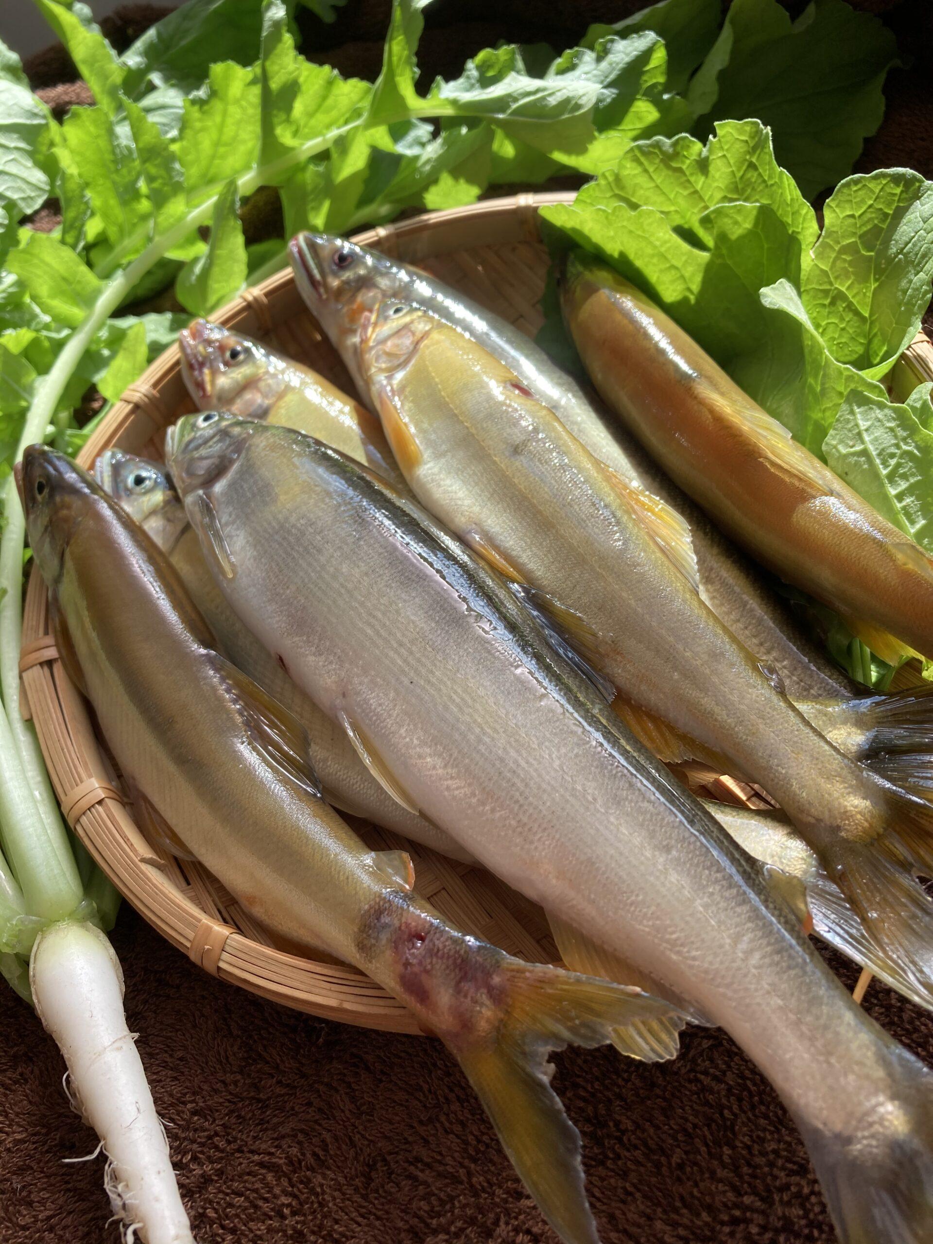 鮎を戴きました | クリスタルビューティー 広島 天然100%ヘナ 美と健康のエステ